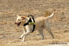 Search&Rescue-HorseShoeRd_0005
