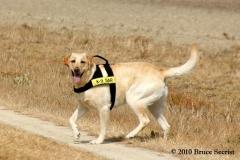 Search&Rescue-HorseShoeRd_0007