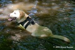 Search&Rescue-HorseShoeRd_0010